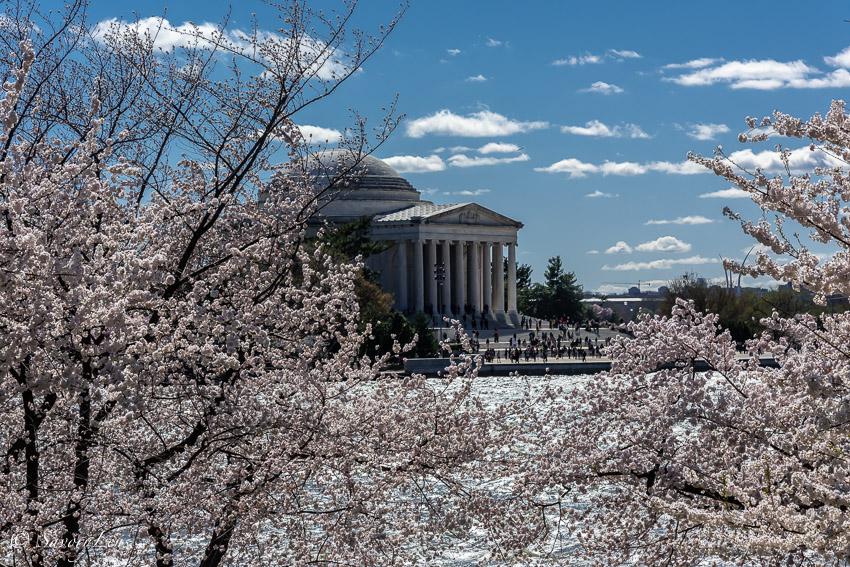 Washington D.C. - Amerikas Hauptstadt zur Kirschblüte