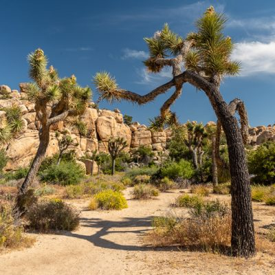 Joshua Tree Nationalpark – Sehenswürdigkeiten und Tipps